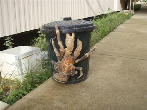 crab2.JPG (158 KB)
