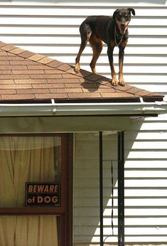 beware-of-dog.jpg (56 KB)