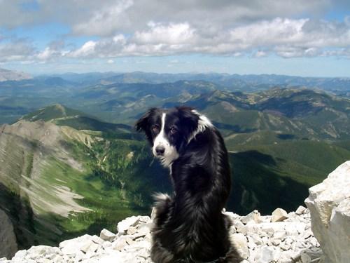 mountaindog.jpg (506 KB)
