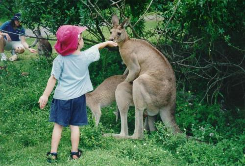 kangaroosnack.jpg (96 KB)