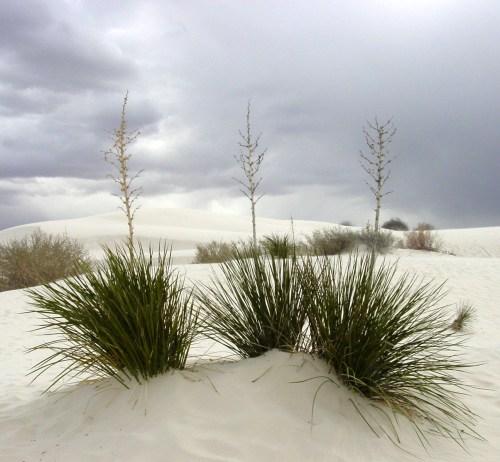 White_Sands_New_Mexico.jpg (803 KB)