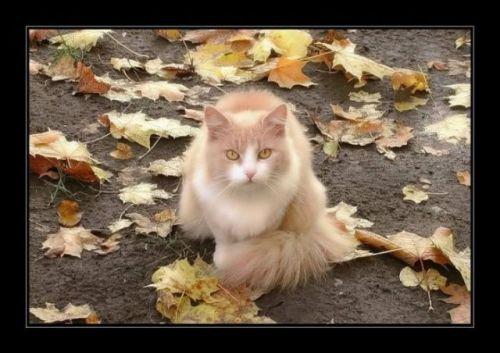 autumn_13.jpg (58 KB)