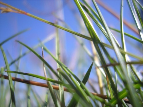 Thin_Grass_by_GheorgheLaza.jpg (324 KB)
