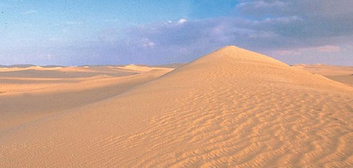 Cozy Classics Sonoran Desert