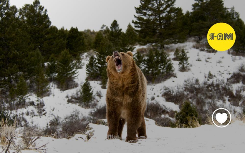 Beware of the Dancing Bear   Passion Brand
