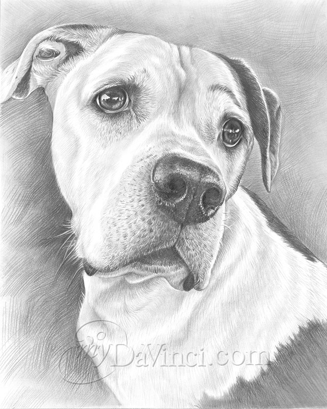 Hand Drawn Pencil Portraits From Photos Pencil Portrait Drawing Sketch Artists