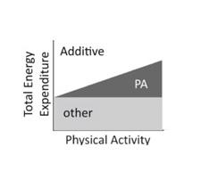 Διατροφή ή άσκηση για αδυνάτισμα;Συχνά βλέπουμε, ακόμα και στα κοινωνικά δίκτυα, άτομα που προσπαθούν να «κάψουν» την «παραπάνω» τροφή «λιώνοντας» καθημερινά στο γυμναστήριο. Ακόμα πιο συχνά βλέπουμε ανθρώπους, που θεωρώντας ότι επειδή καθημερινά ασκούνται πολύ, σχεδόν εξαντλητικά και στα όρια της «υπεργυμναστικής», «δικαιούνται» να τρώνε περισσότερο. Όλοι ξέρουμε ότι αν κάποιος θέλει να χάσει βάρος πρέπει να κάνει «δίαιτα». Ή μήπως και άσκηση; Ή μήπως μόνο δίαιτα ή μόνο άσκηση; Ακόμα μια φορά η επιστήμη αποδεικνύει ότι ο ανθρώπινος οργανισμός ΔΕΝ είναι μια τέλεια μηχανή εσωτερικής καύσης ή ένα κομπιουτεράκι! Δεν πρόκειται να απορροφήσει όλες όσες θερμίδες του βάλουμε, αλλά ούτε πρόκειται να «κάψει» όσες θερμίδες εμείς θέλουμε. Ακόμα και αν βάλουμε στόχο να κάνουμε καθημερινά προπόνηση «πρωταθλητού», το σώμα θα βρει τρόπους να οδηγηθεί στην «αγαπημένη και πολύτιμη» ΙΣΟΡΡΟΠΙΑ! Το παραπάνω συμπέρασμα είναι γνωστό στους επαγγελματίες υγείας που ασχολούνται με διατροφικές διαταραχές και ειδικά με άτομα, τα οποία αναλώνονται σε πρακτικές «υπεργυμναστικής». Τώρα το συμπέρασμα αυτό επιβεβαιώνεται και επίσημα, αποτελώντας μεγάλη «ανακούφιση» για τους «ασθενείς», που έχοντας πλέον «αποδεικτικά στοιχεία» ενάντια στην «φωνή της διαταραχής», μπορούν να «διεκδικήσουν» από την διαταραχή δικαίωμα στην σωστή άσκηση και όχι στην «αυτοτιμωρία». Επίσης, φαίνεται ότι στην προσπάθεια μακροχρόνιου ελέγχου του ενεργειακού ισοζυγίου μεγαλύτερη βαρύτητα έχει διατροφή παρά η φυσική δραστηριότητα. Πράγματι, η άσκηση προσφέρει θετική επίδραση στον μεταβολισμό και πολλά οφέλη για την υγεία. Ωστόσο, η μακροπρόθεσμη επίδραση της φυσικής δραστηριότητας στην καθημερινή συνολική ενεργειακή δαπάνη δεν είναι ξεκάθαρη και φαίνεται ότι υπάρχει ένα μέγιστο προσαρμοστικό «πλατό». Μέχρι σήμερα, κυριαρχούσε η υπόθεση ότι υπάρχει μια προσθετική δοσο-εξαρτώμενη επίδραση της φυσικής δραστηριότητας στη συνολική ενεργειακή δαπάνη (kcal/ημέρα), δηλαδή ότι κάθε αύξηση της σωματικής δραστηριότητας οδηγεί σε αντίστο