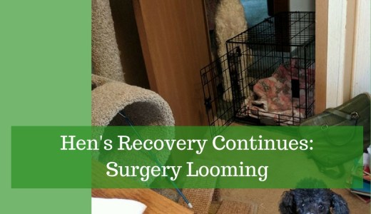 hen's recovery continues