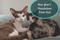 new year's resolutions from cats