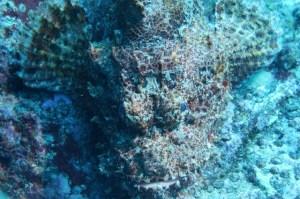 Titan Scorpion Fish
