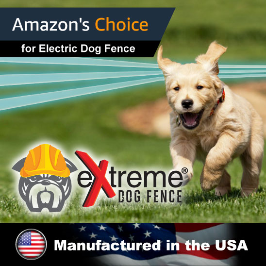 Coupon codes for electric dog fences
