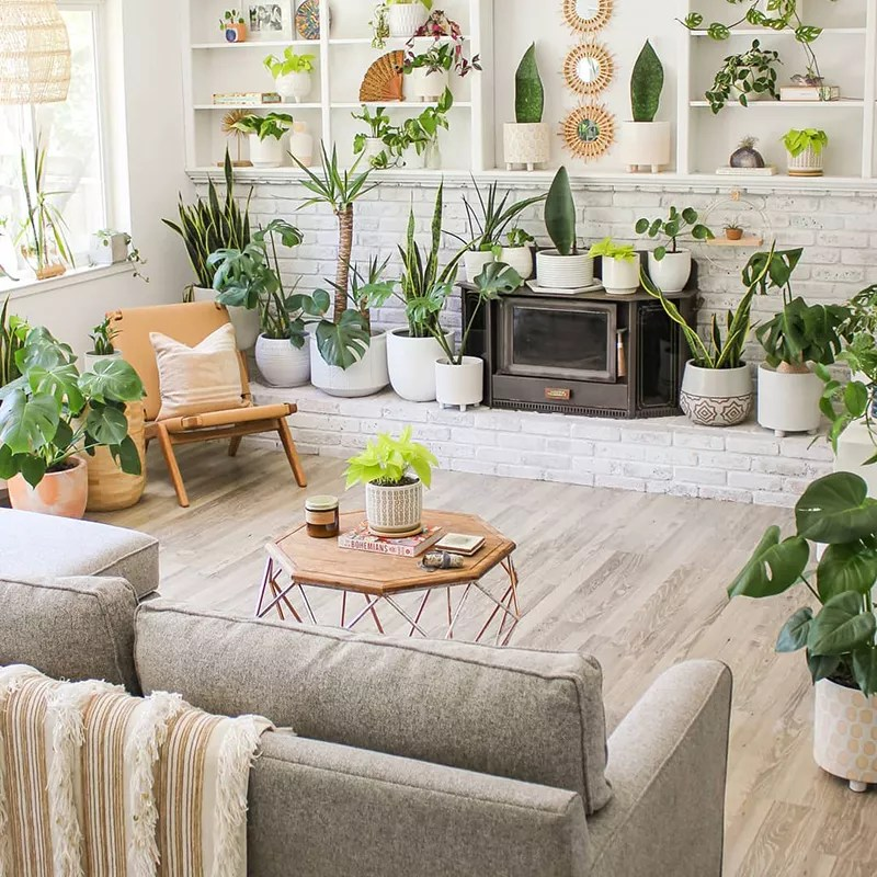 Living room with lots of plants and greenery.