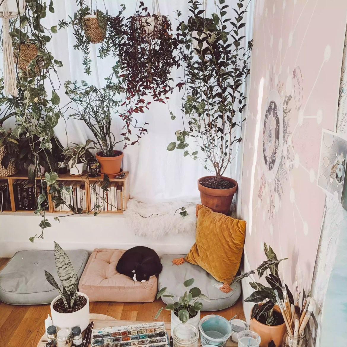 Living room with lots of hanging plants.