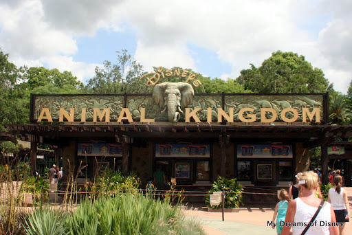 My Favorite Sites and Sounds at Animal Kingdom