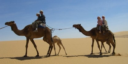 Private excursion: Sinai Jeep Safari, Abu Galum Snorkeling, Camel Ride and Bedouin Lunch from Sharm El-Sheikh