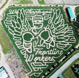 bella organics corn maze