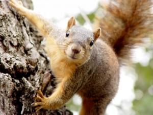 Image result for squirrel gun