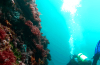 Top 10 of Jacques Cousteau's Best Dive Sites – Map Included!