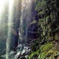 Springbrook: Rainforest and Waterfalls Heaven at Brisbane's Doorstep