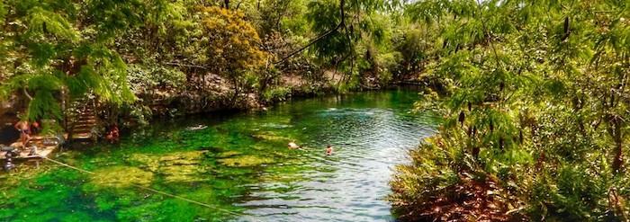 Best Cenotes for Snorkelling in Tulum (Mexico) - Garden of Eden Cenote Landscape