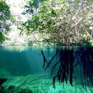 Casa Cenote - Mangrove under above water