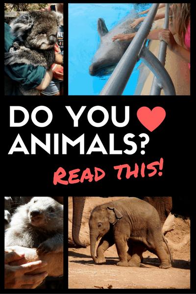 love-animals-how-to-choose-tourist-activities