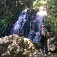 Border Ranges National Park: Hiking & Camping in a Captivating Forest