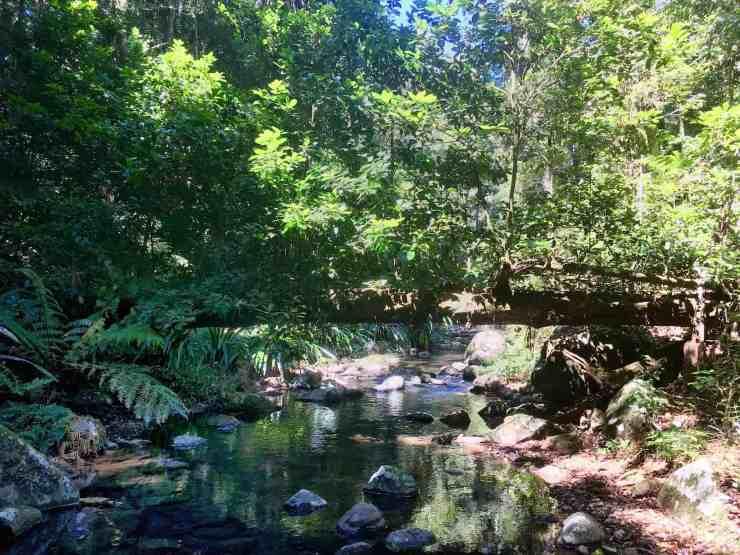 Border Ranges NP - Brindle Creek