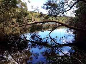 Cooloola NP Hike Rainbow Beach 02 Poona Lake