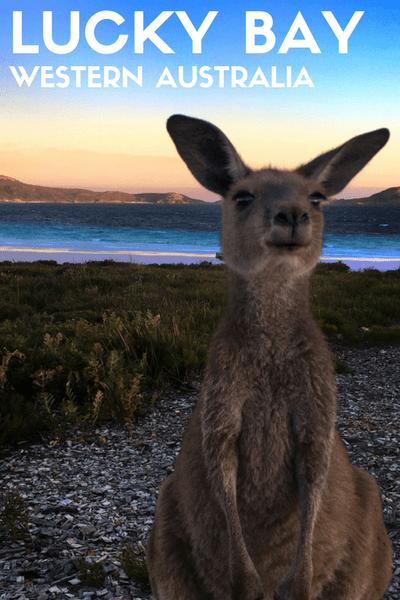 lucky bay western australia kangaroo beach