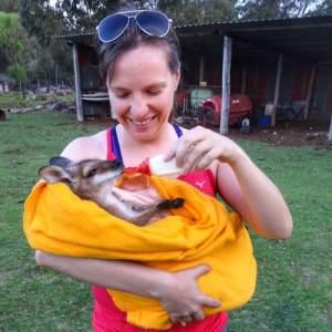 Australia Farm Baby Wallaby