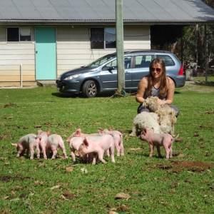 Australia Farm Piglets