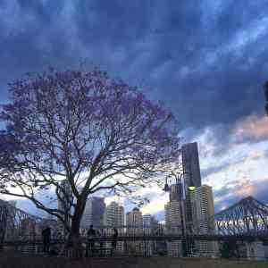 Brisbane - Jacarandas - Wilson Lookout
