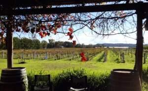 Granite Belt - Summit Estate Winery