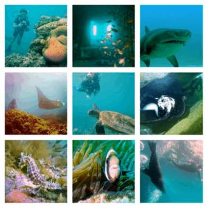 Best Diving Sites in Australia - Sydney - Brisbane - Cairns