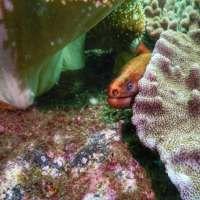 Scuba Diving Cook Island: A Coral Reef Near The Gold Coast