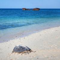 Heron Island, Great Barrier Reef: Things To Know To Plan The Best Trip