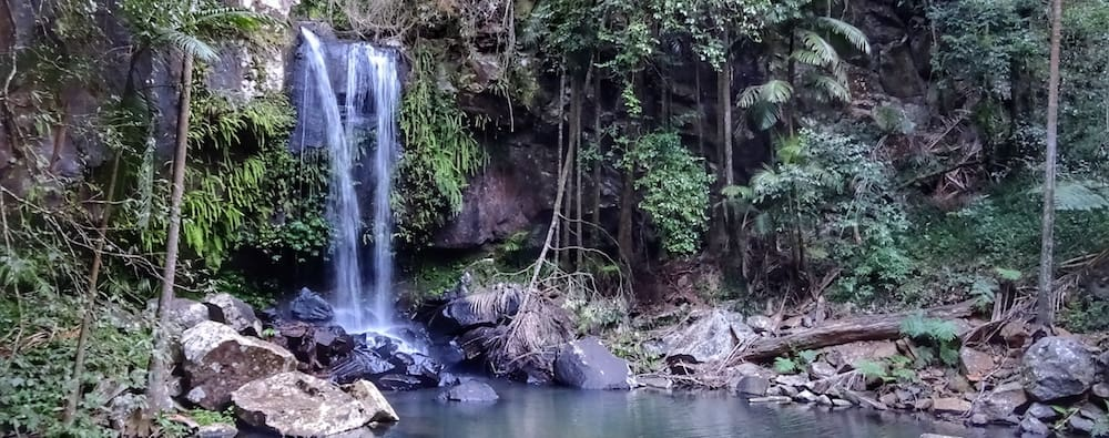 Curtis Falls Mt Tamborine Waterfalls