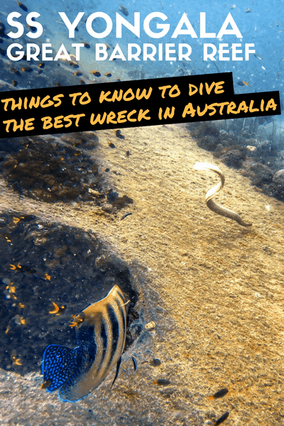 The SS Yongala wreck is the best wreck dive in Australia, and one of the best in the world.