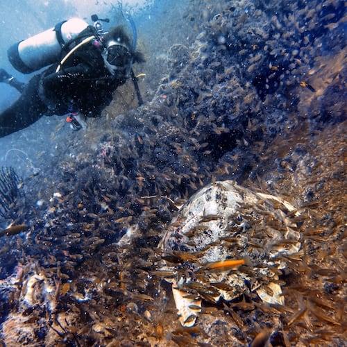 SS Yongala dive - Wreck + Elo + Turtle
