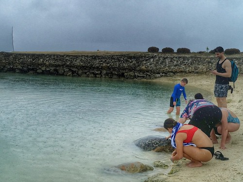 Vanuatu Port Vila Unethical Turtle Sanctuary