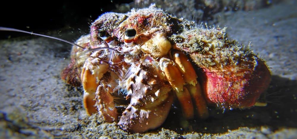 Gold Coast Seaway night dive shell
