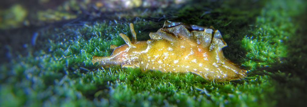 Gold Coast Seaway nigth dive slug on the stairs