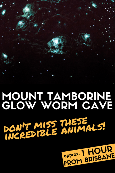 MOUNT TAMBORINE Glow Worm Cave