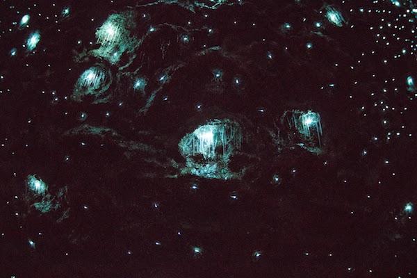 Tamborine Mountain Glow Worm Cave