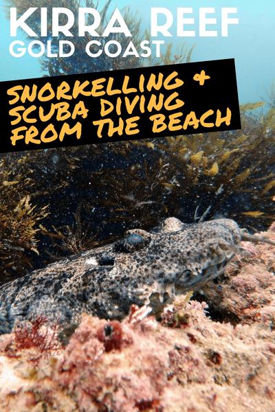 Kirra Reef Gold Coast - Shore Snorkelling and Scuba Diving