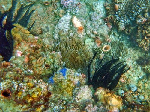 Kirra Reef Snorkel