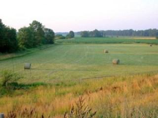 round hay bales in field