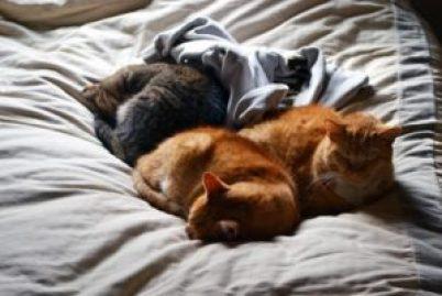 cat pile 4