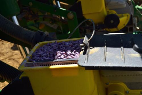 16-row corn planter individual hopper